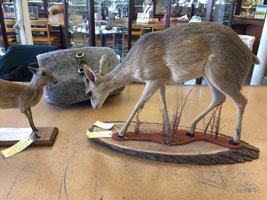 deer mounts risd nature lab